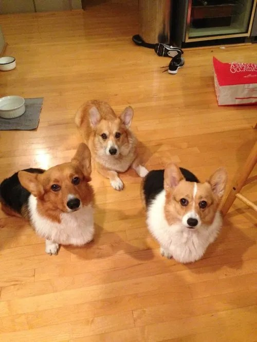 Wolfgang, Hambone and Cupcake