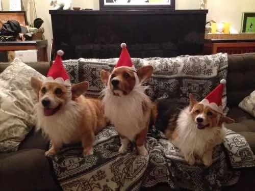 Happy Corgi Holidays!