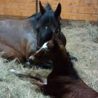 Welcome to our latest Gamborian colt!