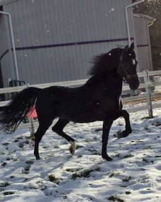 black-ice-nov-2016-trot