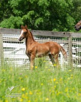 2018 Filly by MI Black Ice