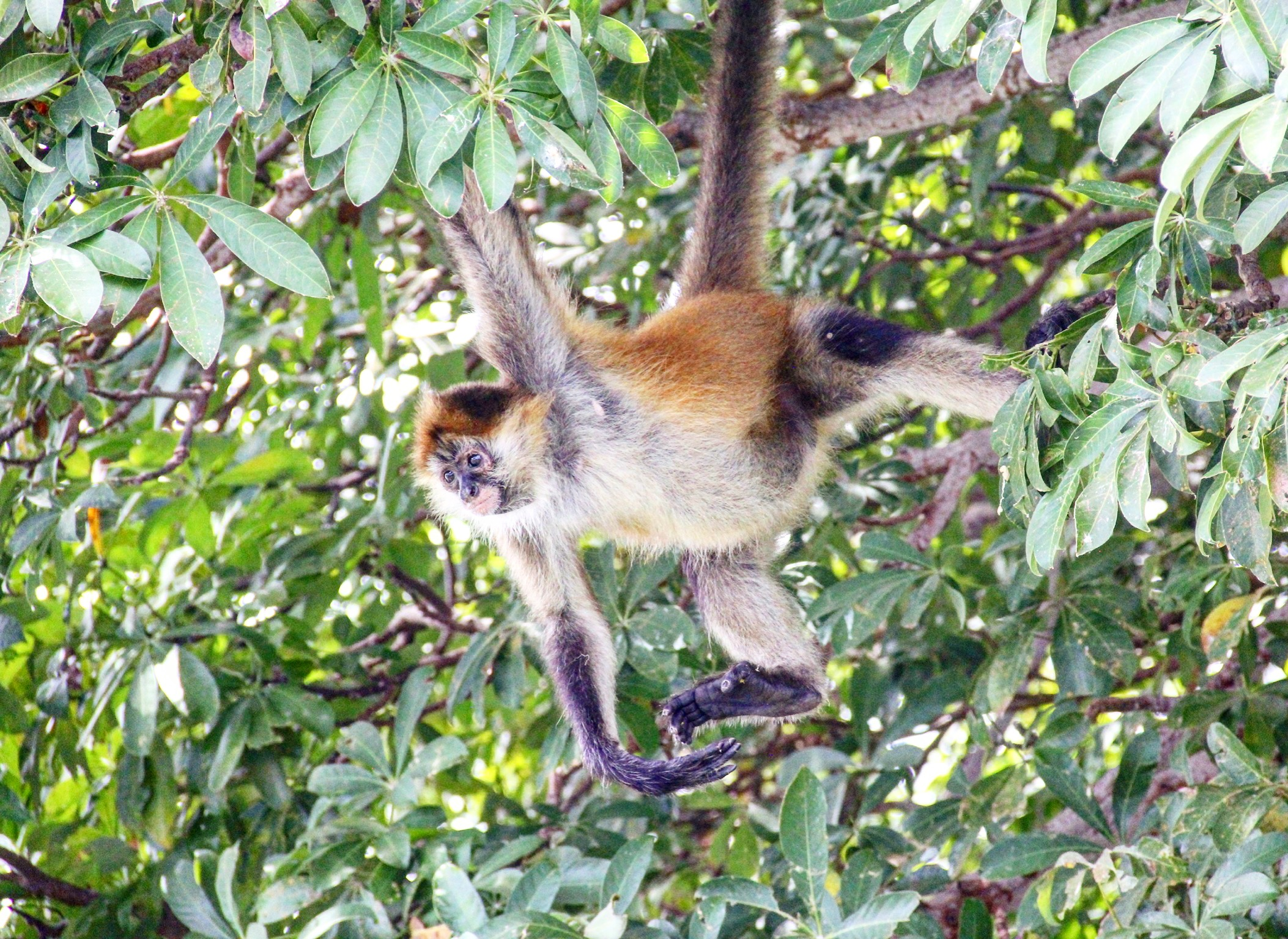 One of our friends on monkey island