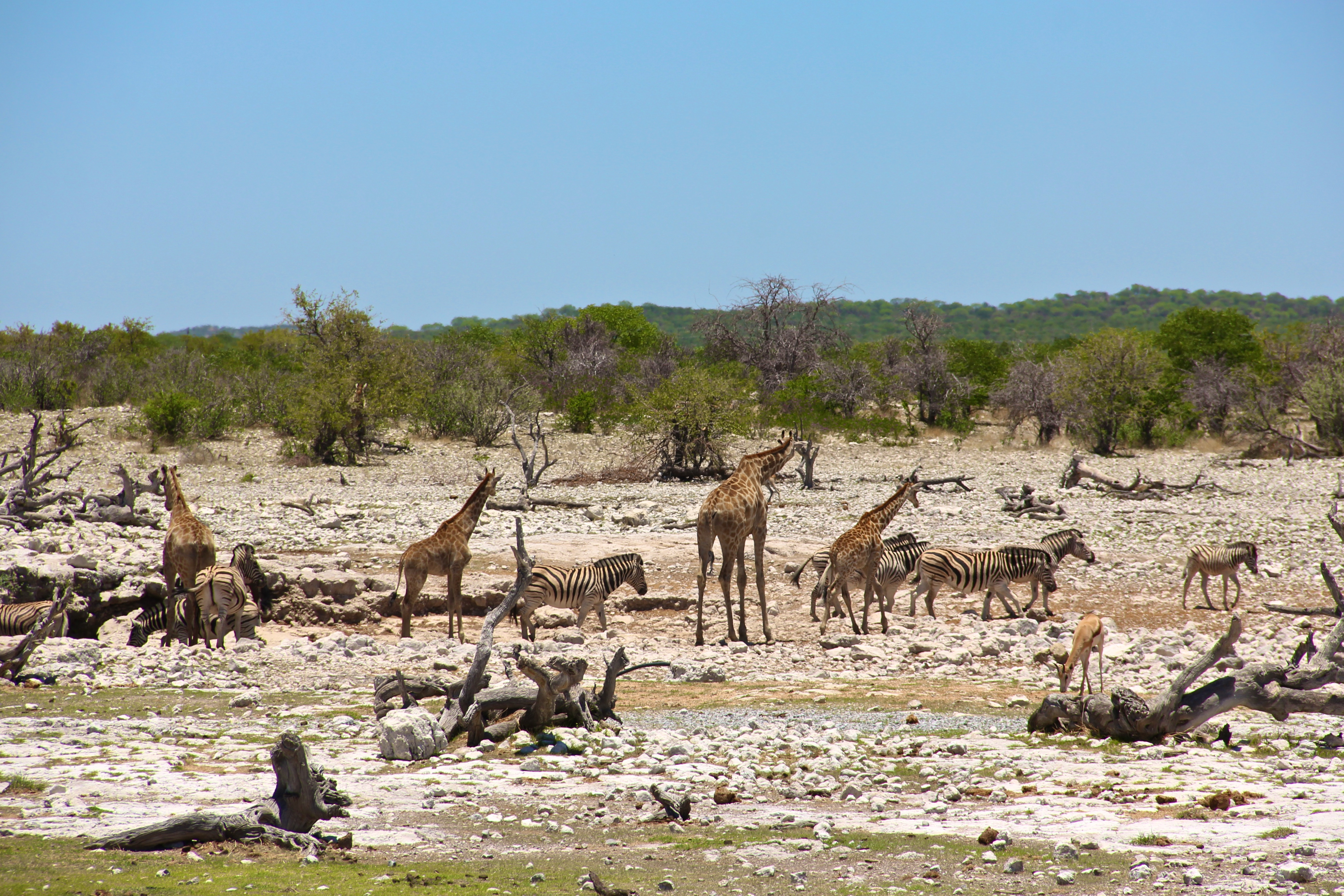 Watering hole in Etosha NP