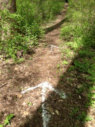trail markings