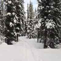 Eight Fun Family-Friendly Winter Activities in Jasper
