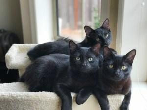 Three kittens on cat tower