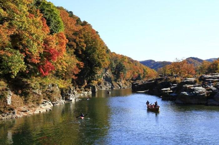 【日本水上賞楓】人氣賞楓行程:搭乘遊船、泛舟,從河上瞭望秋楓景色!
