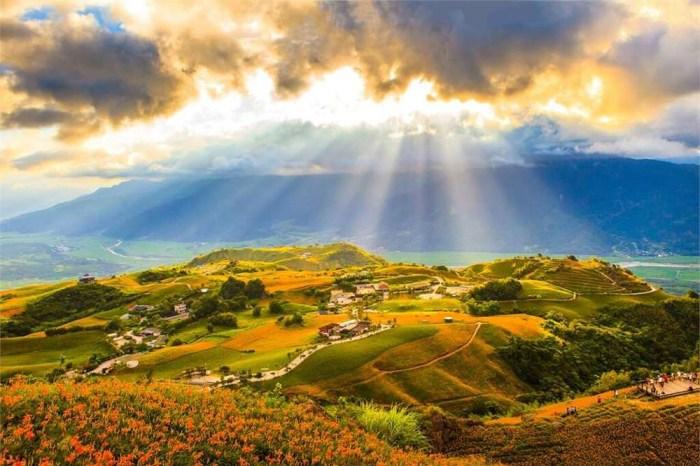 【花東 3 大金針花季】六十石山、赤科山、太麻里金針花活動、交通懶人包