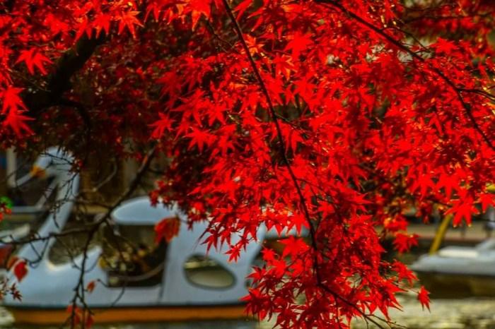 【東京賞楓景點推薦】東京近郊、可當天來回的紅葉熱點!
