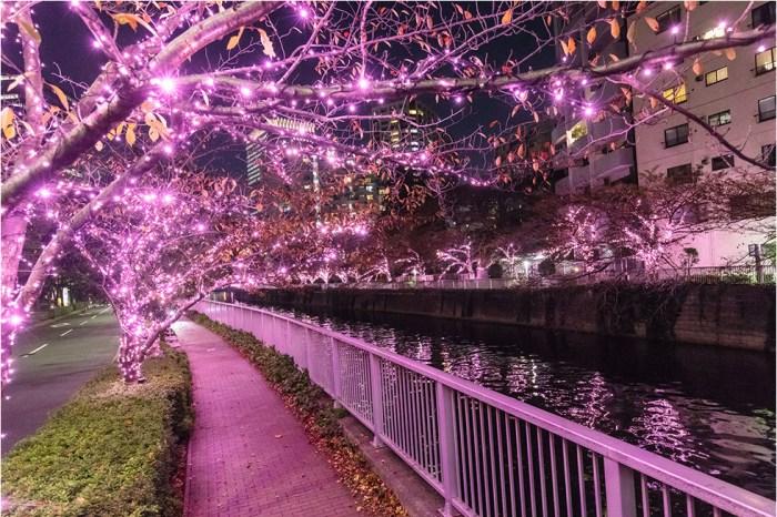 2021東京夜櫻綻開!目黑川冬季聖誕燈飾:2.2公里絕美粉紅「冬之櫻」