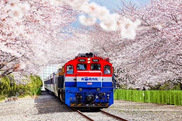 【韓國鎮海櫻花祭】人氣爆棚!鎮海軍港節賞櫻時間、景點、交通懶人包!