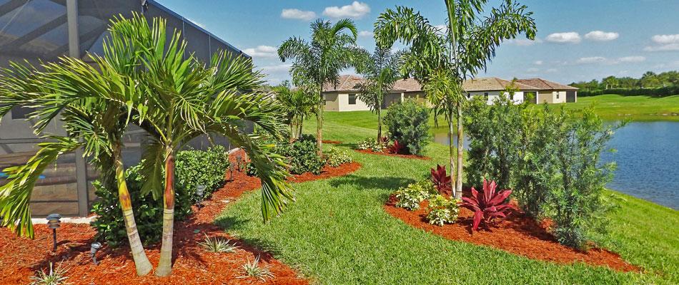 The 5 Most Popular Palm Trees in Bradenton, FL | Three ... on Palm Tree Backyard Ideas id=15954