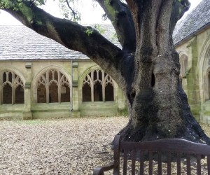 The cloisters in Oxford University's New College with a large tree