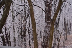 A shot out my back window after that ice event. Photo by Mike Hartley