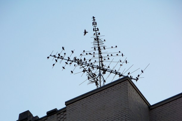 Sunroof shot on 16th St. Is this what they mean by Birds Eye View?  Photo by Mike Hartley