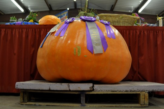 Pumpkin from Bumpkin Yes that is a full size skid under it. Photo by Mike Hartley