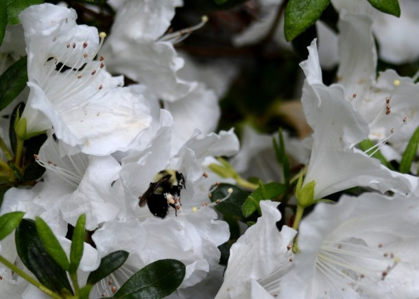 Bee's working hard before the rains. Photo by Mike Hartley