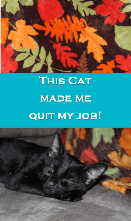 How a Cat Made Me Quit My Job - Amber Temerity