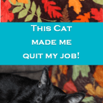 How a Cat Gave Me the Courage to Follow My Dreams