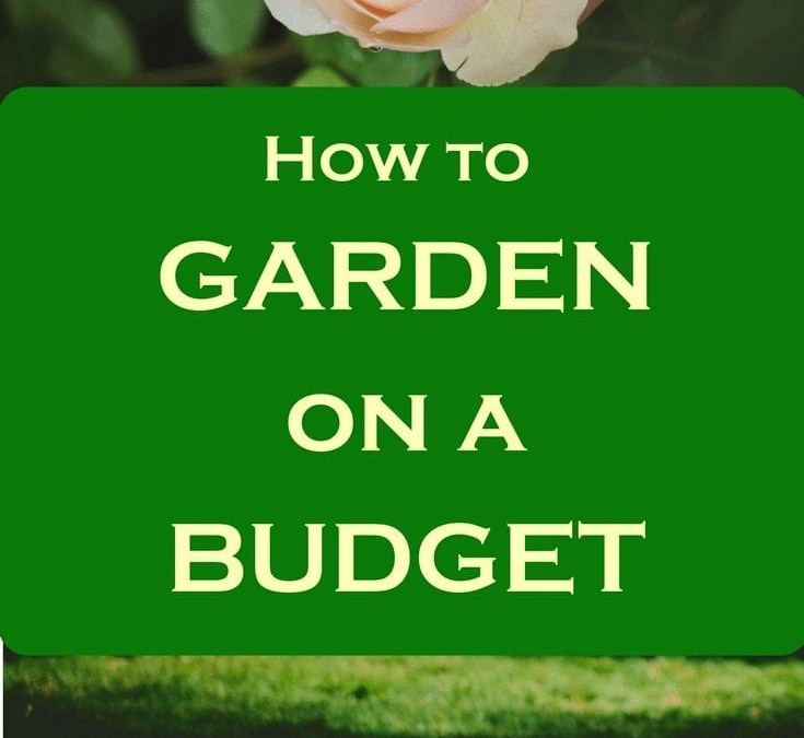 How to Garden on a Budget