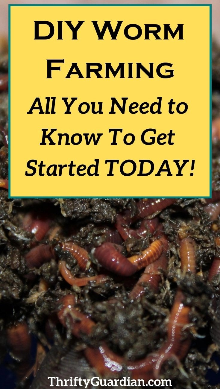 How to start your own worm farm using a tote. Create your own compost bin and DIY a worm farm to get into vermiculture today!