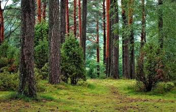 poland forest