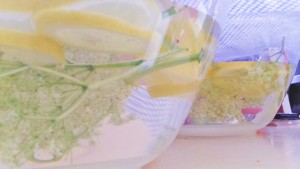 Elderflower champagne recipe home brew lemons sugar bowl brewing