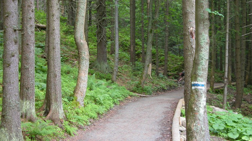 Blue trail marker