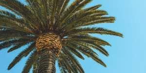 long beach palm springs