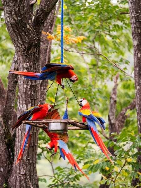 Airbnb Excursion Costa Rica