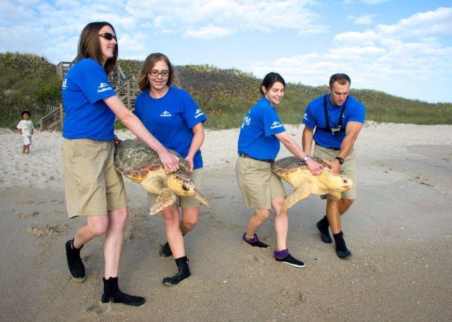 20130410_Sea Turtle Release_11