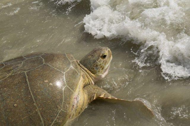 20130815_Coco Beach Turtle Release_24