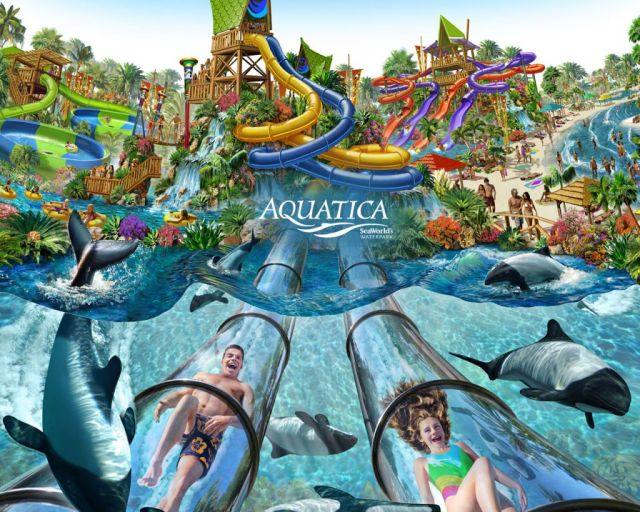SeaWorld phasing out Commerson's dolphins at Aquatica Orlando