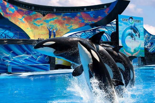 SeaWorld announces the creation of a Resort Development Group