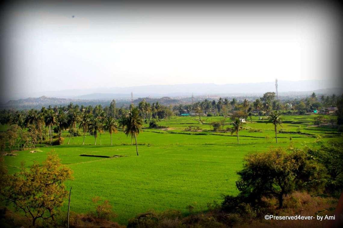 The fields along the Sanapur Lake