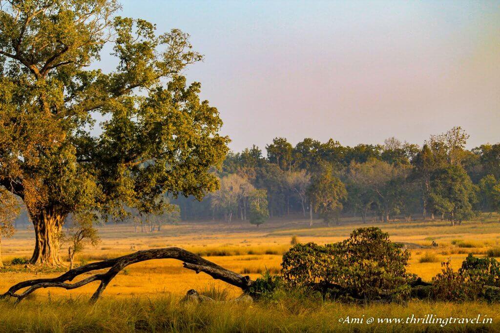 Tiger Tales from Kanha National Park, Madhya Pradesh - Thrilling Travel