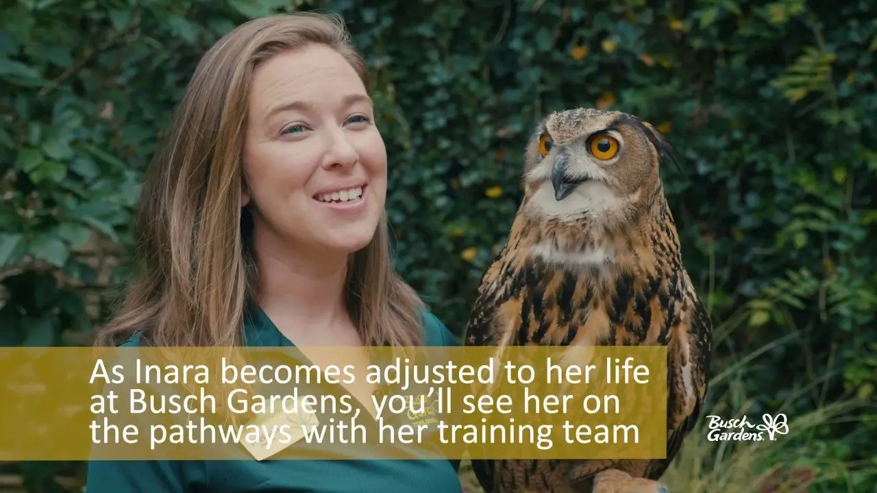 Inara the Eurasian Eagle Owl | Animal Spotlight