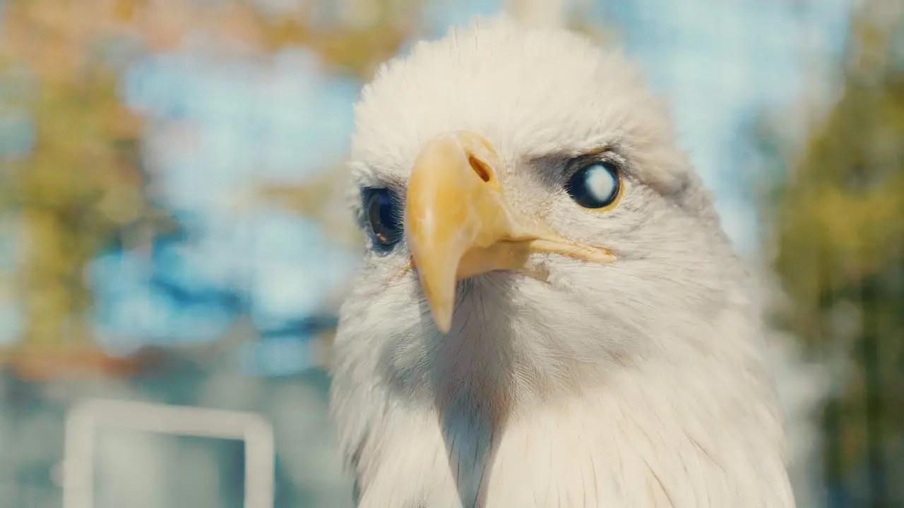 Lincoln The Bald Eagle | Animal Spotlight