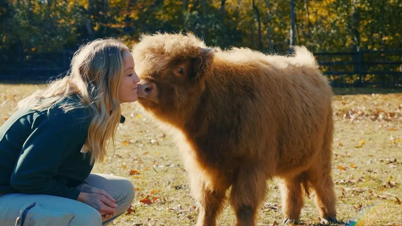 Poppy the Scottish Highland Cow | Animal Spotlight