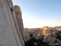 Solid Gold - Joshua Tree NP
