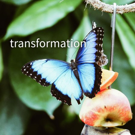 thrive naturally transformations