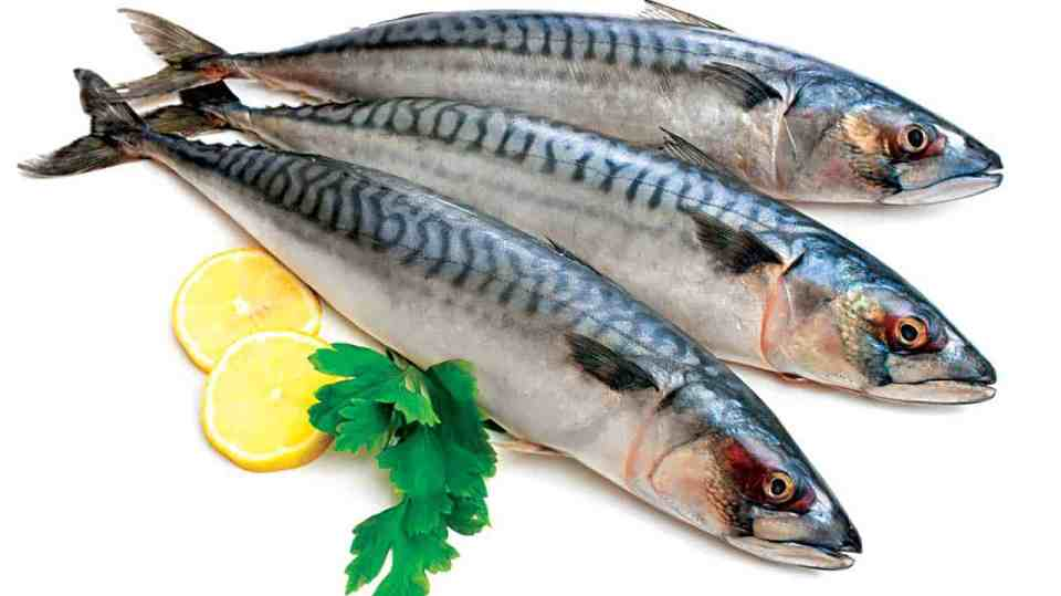 fatty fish may accelerate weight loss