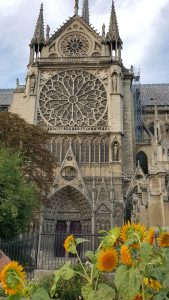 sunflowers at Notre Dame web