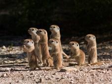 tiny prairie dogs