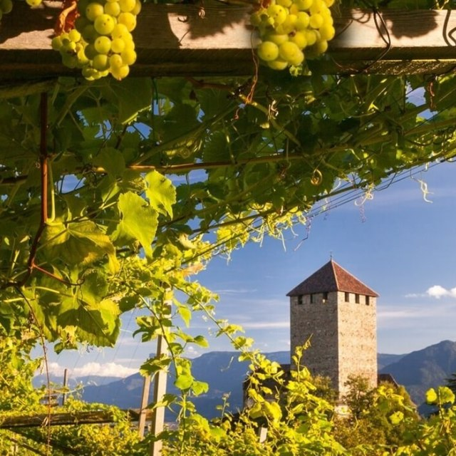 Epic Summer Sips — Discover the Unique Wines of Alto Adige