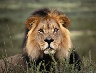 Where to Go on Safari To See the Big 5