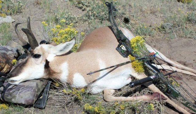Bowhunting For Pronghorn