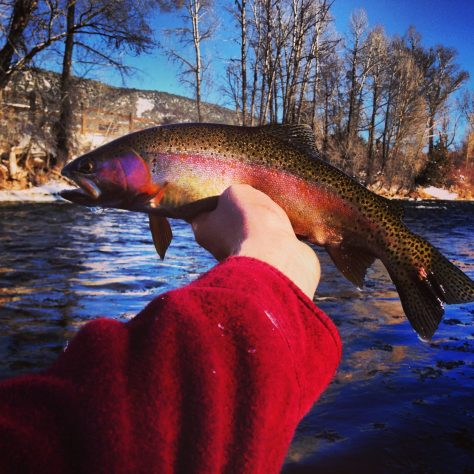 A selfie photograph of a rainbow trout in full colors, caught while flyfishing on the Frying Pan River near Basalt, Colorado