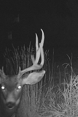 Watching You Watching Me - Photo Courtesy of Greg Vitale of Carbondale, Colorado