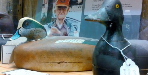 An American Widgeon Decoy, or Baldpate by Chris Sprague of Beach Haven, New Jersey. Displayed at the Tuckerton Seaport and Baymen's Museum in Tuckerton, New Jersey. New Jersey Decoys Rule!